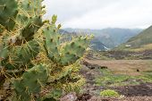 stock photo of spiky plants  - Spiky Cactus in Foreground with Green Misty Mountains in Background - JPG