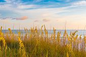 stock photo of dune grass  - Sunset on ocean beach with sand dunes with grass - JPG