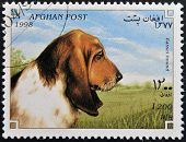 AFGHANISTAN - CIRCA 1998: A stamp printed in Afghanistan shows Dog basset hound circa 1998