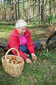 Woman Collect Mushrooms In Forest