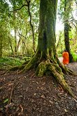 Buddhist Monk In Misty Tropical Rain Forest. Sun Beams Shining Through Trees At Jungle Landscape. Tr