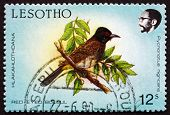 Postage Stamp Lesotho 1988 African Red-eyed Bulbul, Bird