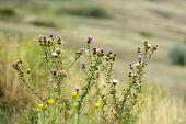 Beautiful flowers in field