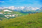 Colorado Panorama With Elks
