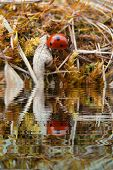 picture of water bug  - Ladybug sitting in grass with water refections - JPG
