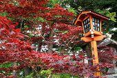 Japanese Style Lamp During Autumn Season