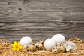 Easter eggs on old wooden background with copy space for your message