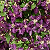 Flower background composition