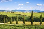 Tuscany Landscape, Cypress Trees And Vitaleta Chapel On Back, Val D Orcia, Italy