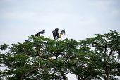 Painted storks on tree top