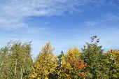 Bright Autumn Trees.