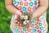 Kids Arms Holding Nest With Eggs