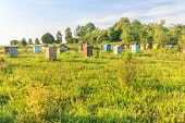 Rural Farm Apiary With Multicolor Beehouses