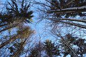 blue sky and treetops