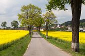 Road With Village, Trees And Rapeseed Field