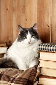Cute cat sitting on plaid with books