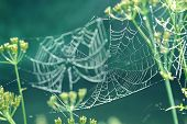 Gentle Naturalistic Background With Spider Web With Dew.