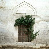 Ivy On An Old Window And Wall