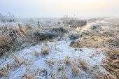 picture of wetland  - Cold Winter landscape of wetlands with mist in Holland - JPG