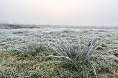 Close Up Of Grass With Hoar Frost On A Winter Day
