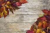 Beautiful Colorful Closeup Background With Red And Yellow Leaves On Old Wooden Board.