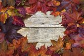 Beautiful Colorful Background With Red And Yellow Leaves On Old Wooden Board.