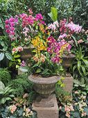 image of greenery  - Orchid arrangement in stone vases amidst lush greenery - JPG