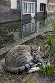Alley cat sleeping near the canal