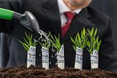 pic of american money  - Businessman Watering Plants Covered With American Dollar