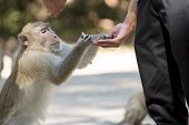 Human's Hand Feed Monkey