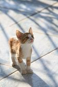 Cute red kitten looking curiously upwards poster