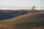 Vineyards At Winter Time