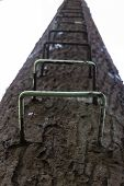The Ladder On Telephone Pole In Tall Fake Tree