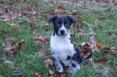black, White, Grey pup