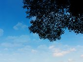 Silhouette Leaves Plant Over Sky