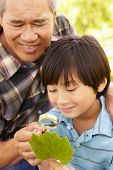 stock photo of grandfather  - Boy and grandfather examining leaf - JPG