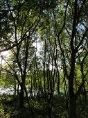 image of backwoods  - Lakeside forest photographed at Shobrooke Park in Shobrooke in Devon - JPG