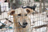 foto of stray dog  - Stray dog behind the corral of a dog refuge - JPG