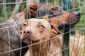 foto of stray dog  - Stray dogs behind the corral of a dog refuge - JPG
