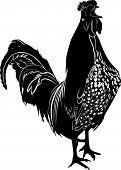 foto of black-cock  - nature cock bird agriculture Vector isolated silhouette - JPG