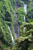 image of bromo  - Madakaripura waterfall and ferns at Bromo Tengger Semeru National Park East Java Indonesia - JPG