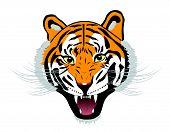pic of tigers-eye  - Tiger anger - JPG