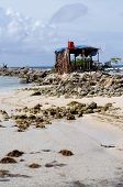 pic of beach hut  - France a Robinson hut on the beach of Sainte Anne in Guadeloupe - JPG