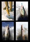 Ice Fishing Collage Variety