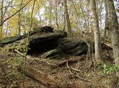 Forest Rock Formation