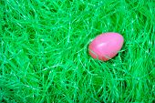 Egg In The Grass