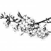 Sakura.eps