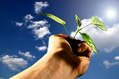 hand plant new life