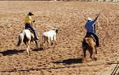 image of brahma-bull  - a team roping competition at a rodeo - JPG