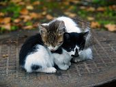 Pair Of Pitiable Homeless Small Cats Get Warming  Series 3 Of  3 poster